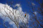 Paradiesvögel gibt's in Australien überall...