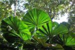 Im Dschungel von Daintree