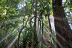 Daintree Rainforest, Cape Tribulation