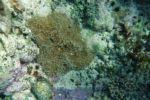 Wer findet den kleinen Nemo??