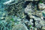 Nemo's Freunde