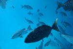 Ein paar der grösseren Fische