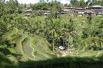 Reisterrassen von Tegalalan