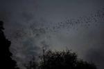 Ausflug der Fledermäuse