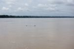 Mekong Flussdelfine