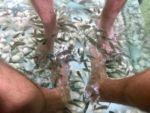 Fussbehandlung durch Putzerfische