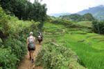 Wandern entlang der Reisfelder