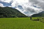 Wandern durch Reisfelder