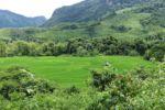 Reisfelder um Hoy San