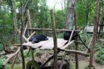 Auch für die Schwarzbären ist es zu warm...
