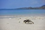 Strand von Gili Gede