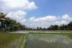 Reisfelder von Tetebatu